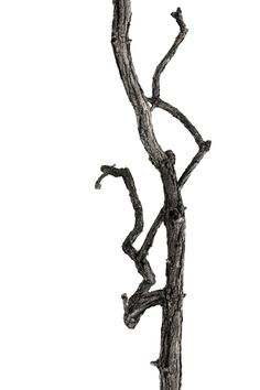 twisted branch (mary jo hoffman)