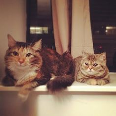 @Kristen Anderson  I can't help myself.  These two are just too cute.  Ruby and Pandora #Caturday