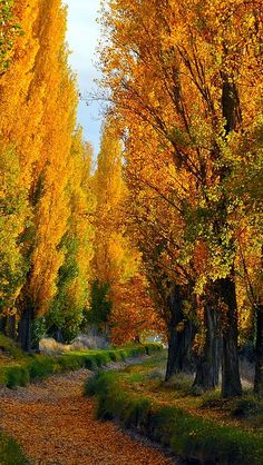 Beautiful autumn trees, inviting path!  Gotta love it...autumn! by vadaka1986 <pin by Elsebeth Bruun on Smukke Billeder>