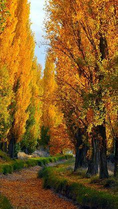 Beautiful autumn trees, inviting path! Gotta love it...autumn! by vadaka1986 <pin by Elsebeth Bruun on Smukke Billeder>