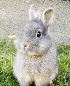 bunnies - Google Search