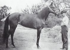 Undefeated 19th century Standardbred totting mare Nancy Hanks
