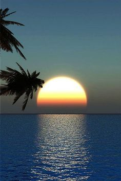 Palm tree & sunset
