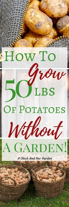 I love potatoes but hating growing potatoes! It can be so much work and takes up even more space!! With this method of growing potatoes you really could do it without even having a garden! #gardening #growyourownfood #containergardening #vegetablegardening #growpotatoes #howtogrowpotatoes