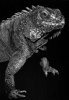 Iguana Scratchboard by longlivethenova on deviantART