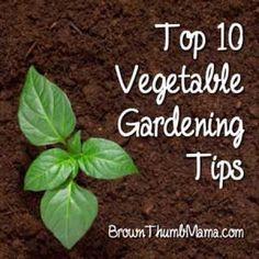 top 10 veggie gardening tips