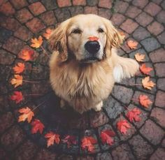 #hunde #liebe