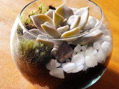 Terrário Suculenta - mini (lembrancinha)
