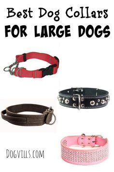 Check out these functional yet fashionable best dog collars for large dog breeds