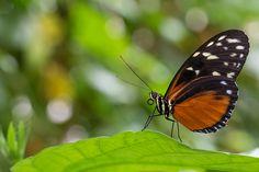 Für Liebhaber von Schmetterlingen und anderen Insekten gibt es vor den Toren Hamburgs in Friedrichsruh den Garten der Schmetterlinge. Neben dem Gewächshaus mit seinen vielen kleinen und großen Flug…