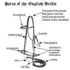 parts of a saddle bridle pony club pinterest saddles horse rh pinterest com horse bridle parts diagram Horse Saddle and Bridle Parts