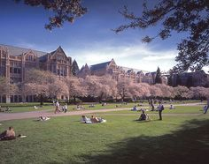 The Quad cloaked in spring cherry blossoms, U of W