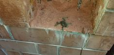 When the mason removed brick so architect Ben Robinson, AIA could investigate moisture problems, this little guy jumped out! Guess all that dampness was a perfect habitat for frogs. Masonry Construction, Brick Masonry, Frogs, Guy, Brickwork