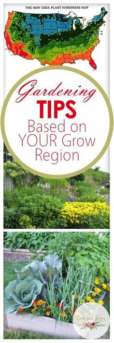 Gardening Tips Based on YOUR Grow Region #organicvegetablegardening #OrganicGardeningTips