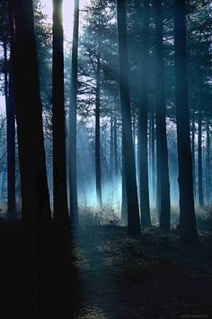 Photography winter mist in forest haunted forest by gunadesign