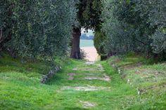 Tuscany, Toskana by biloop, via Flickr