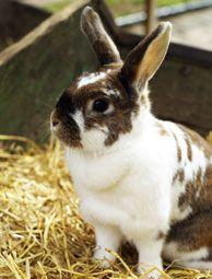 {5 Rabbit Illnesses to Know}