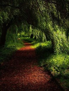 ✯ Path through the Forest