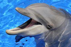 Delfinfaj végveszélyben a Mekong folyón
