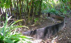 Wenn die Rhizomsperre zu eng bemessen wird, leidet der Bambus unter Trockenschäden und beginnt zu kümmern oder bricht aus