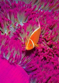 Beautiful coral reef! I absolutely love them.