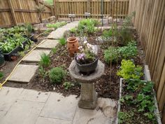 May 2014 - plants are growing and a nursery bed of new ones in the veg plot. So exciting!