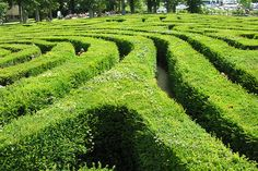Longleat Hedge Maze  #greenwithenvy #lifeinstyle