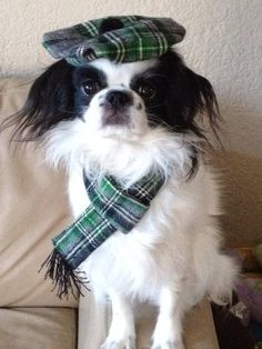 Plaid Scottish Tam and Scarf Set Small Dog by Doginafez on Etsy