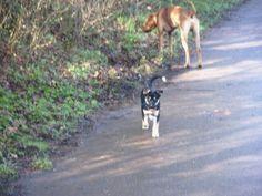 rr-smilla Dogs, Animals, Doggies, Animaux, Animal, Animales, Pet Dogs, Dog, Animais