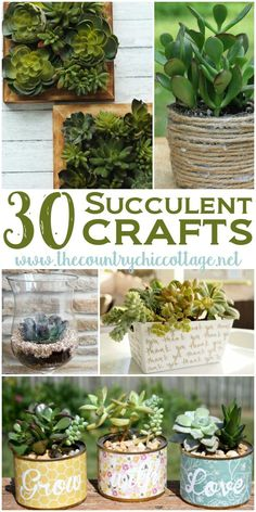 30 Amazing Succulent Crafts for your home! Fun idea for your home or to give as a gift.