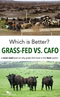 "Are you asking yourself the question, ""Why is grass-fed meat better?"" If you are, here's a jam-packed post on the benefits of grass-fed meat and how to find it."
