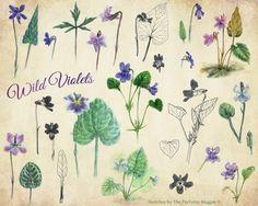 violet-sketches.jpg 642×514 pixels