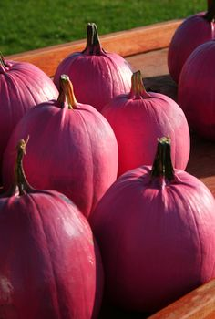 These gorgeous gourds were grown from Harris' seeds and painted pink for October Breast Cancer awareness! Pumpkin Garden, Pumpkin Farm, Autumn Garden, Beautiful Fruits, Color Me Beautiful, Beautiful Roses, Vegetable Animals, It's The Great Pumpkin, Rainbow Fruit