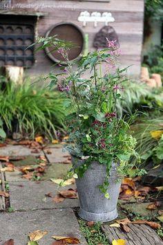 フローラのガーデニング・園芸作業日記-寄せ植え 千日小坊 ジュズサンゴ