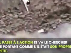 Un chat sauve un chiot alors qu'il est incapable de remonter d'un fossé - http://www.youtube.com/watch?v=torcyp9M-S4