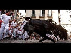 Video Balapan Lari Bareng Banteng Di Spanyol Perayaan adu balap lari vs banteng paling seru di Spanyol ( bullfighting)