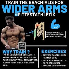 """The key to bigger arms? Hit the little muscle between the biceps and triceps first in your workout. Here's the best way to do it. Pay respect to the brachialis, the forgotten muscle. Train your brachialis first. Make this overlooked muscle found between the biceps and triceps a priority.Training your brachialis is a great way to help """"project"""" a massive arm because as the brachialis develops, it actually pushes your biceps and triceps further away from one another. Gym Workout Chart, Gym Workout Videos, Gym Workout For Beginners, Gym Workouts, Big Biceps, Biceps And Triceps, Biceps Workout, Fitness Gym, Muscle Fitness"""