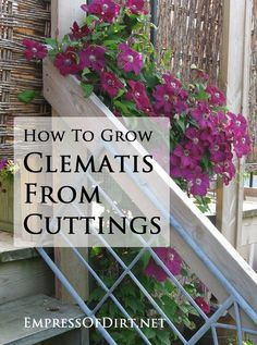 Rock Garden Design How to grow clematis from cuttings - really simple propagation. Great way to get free plants for your garden. Garden Design How to grow clematis from cuttings - really simple propagation. Great way to get free plants for your garden. Container Gardening, Gardening Tips, Organic Gardening, Vegetable Gardening, Herb Container, Succulent Containers, Container Flowers, New Vines, The Secret Garden