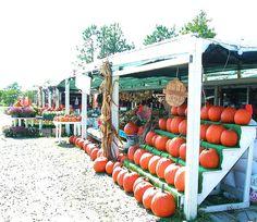roadside pumpkin stand