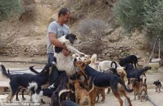This Amazing Man Has Rescued Over 200 Dogs Abandoned in the Wake of Greek Financial Crisis Rescue Dogs, Animal Rescue, Pet Dogs, Pets, Dogs Online, Birman Cat, How To Make Pesto, Broken Leg, Pictures Online