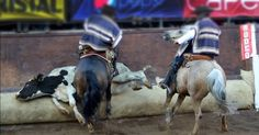 President Alessandri in 1962 enacted a Law declaring the Rodeo as a national…