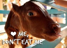 It still astonishes me how many people can lavish love and affection on cats and dogs, and see this calf as being cut and cuddly, but still have no problem eating a veal sandwich.  Is the disconnect really so great that we don't actually understand that the meat on the bun once had a face.