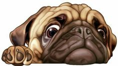 Cute Pug Puppies, Cute Dogs, French Bulldog Art, Background Images For Editing, Pug Art, Cute Cartoon Animals, Pug Love, Best Dogs, Dog Cat