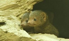 @Rachel Espinosa I don't know what these are, not squirrels, but they're freaking cute.