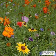 A proven blend of hardy wildflowers that thrives well in the everchanging climate of the Western US.  Whether mountainous, dry or wet,  with 26 different varieties it's sure to bring color to your landscape.  This mix includes 18 annuals for quick first year color and 8 hardy perennials for color in the second and successive seasons.  Enjoy color for years with the hardy mix perfect for the Western US.