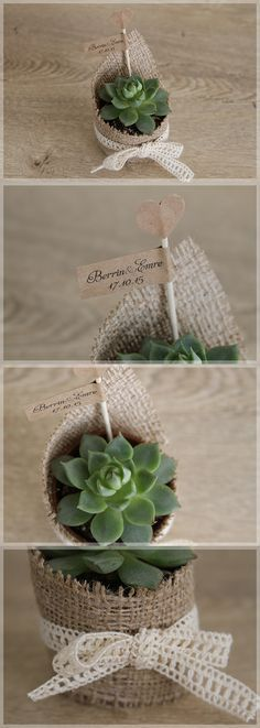 Lovely Colors // Minik Bitki, Succulents as cute little wedding giveaways. These low-maintenance plants are perfect for even Mr&Mrs brown-thumbs. /// Nikah hediyesi olarak modern ve şık sukulentlere ne dersiniz? Bakımı oldukça kolay olan bu minik bitkileri, en beceriksiz dostlarınız bile rahatça yetiştirebilecek! Mükemmel değil mi?