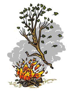"""Illustratie uit """"Boom en Tak"""" van Luc Lansink"""