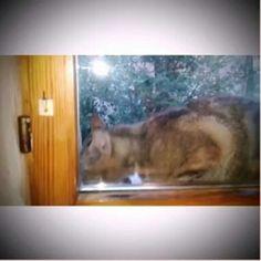 Ecco un altro della banda degli adottivi :-) Lui è #Freddy ♡  Ancora un pò diffidente ma ci stiamo lavorando ;-) E la pappa la apprezza :-)   Dolci Sogni a-mici !  #Buonanotte !   #Goodnight #Sleeptime #sleep #catsofinstagram #cats #instacat #cutecats #sweetcats #lovelovelove #lovecat @WorldCaptures  @animals_captures #animal_captures #cats #pets #animals #photooftheday #ilovemycat #nature #catoftheday #lovecats   #catsmylove #gatti #ioamoglianimali #MIAO :-)