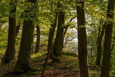 Der Wald im Wispertal, Landschaft, aufgenommen im April