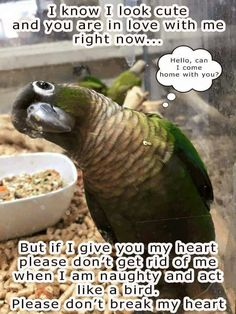 Parrots are keepers